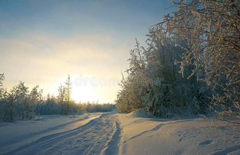 Avlägsen nord för vinterlandskapskog royaltyfria bilder