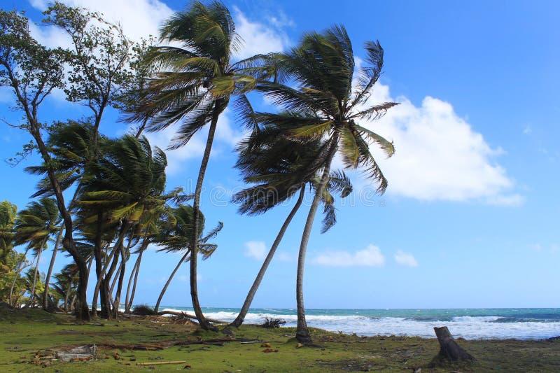 Avlägsen strand och palmträd, Dominica, karibiska öar royaltyfri fotografi