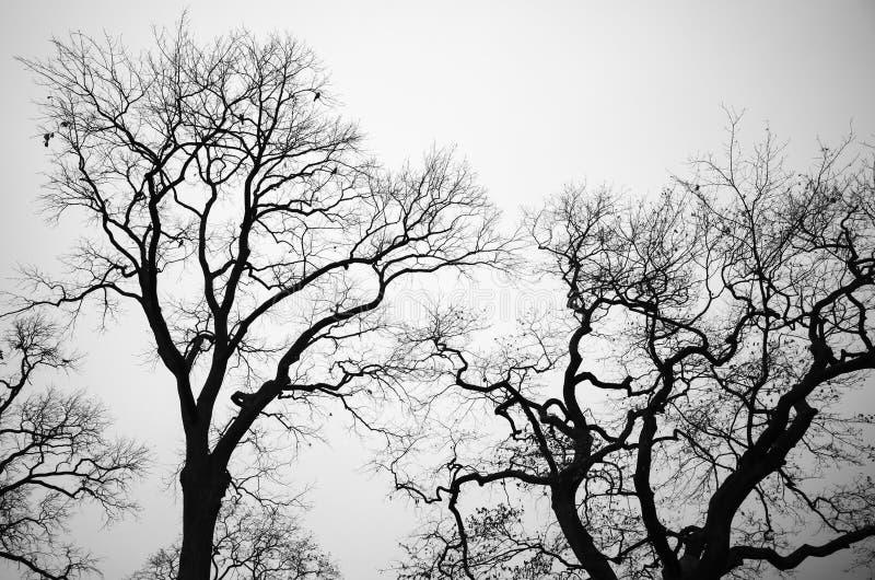 Download Avlövade Kala Träd över Grå Himmelbakgrund Arkivfoto - Bild av trees, gammalt: 76702700