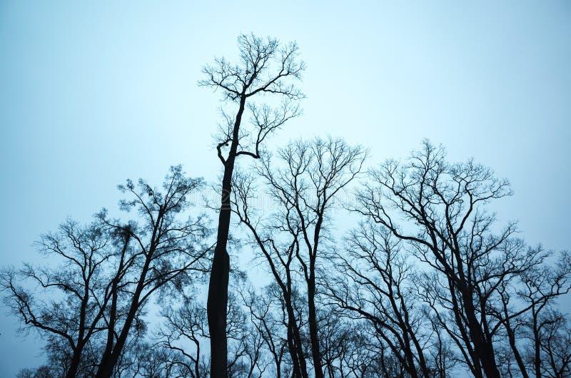 Download Avlövade Kala Träd över Mörker - Blå Himmel Arkivfoto - Bild av stam, monokrom: 76702716