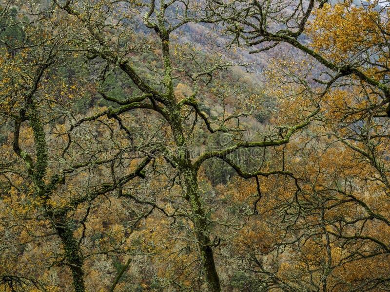Avlövade Trees royaltyfri foto