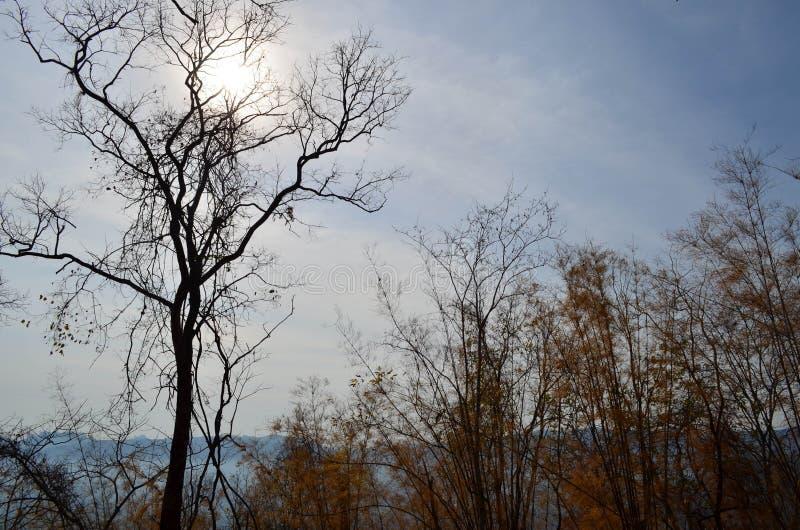 Avlövat träd och solsken royaltyfri bild