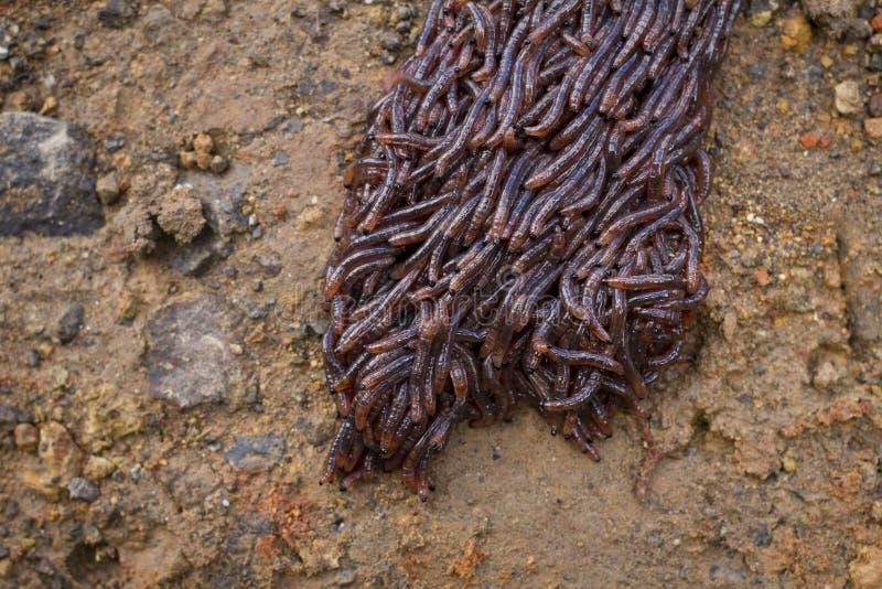 Avmaskar krypning på smutsen royaltyfri foto