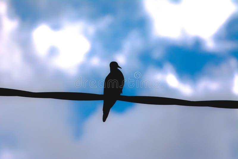 Avoante silhueted contra el cielo azul fotos de archivo