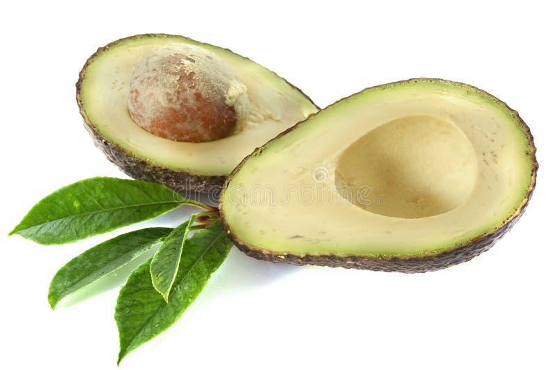 Download Avocado stock photo. Image of leaf, vegetable, studio - 27421838