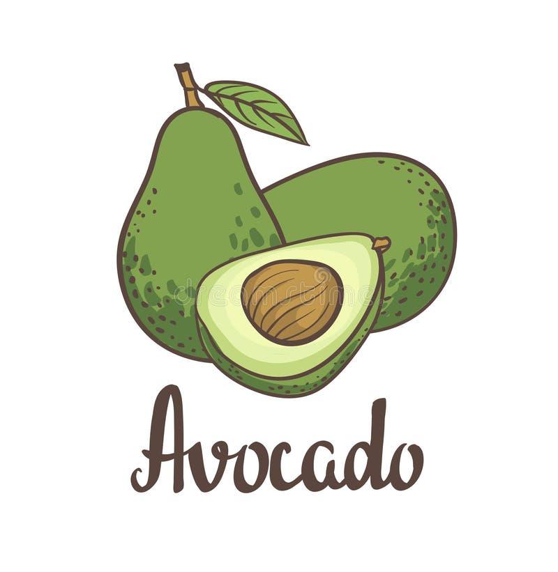 Avocado, de helft van avocado, avocadozaad Hand het getrokken schilderen geïsoleerd op witte achtergrond royalty-vrije illustratie