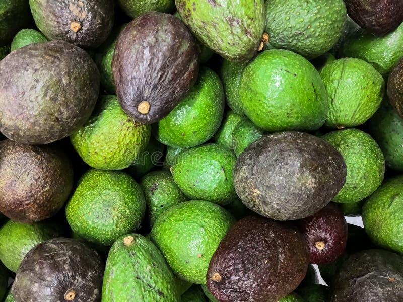 Avocado di Hass con pelle colorata e irregolare verde scuro e verde Persea americana immagine stock libera da diritti