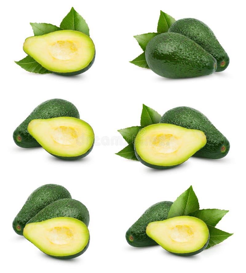 Avocado isolated on white stock photography