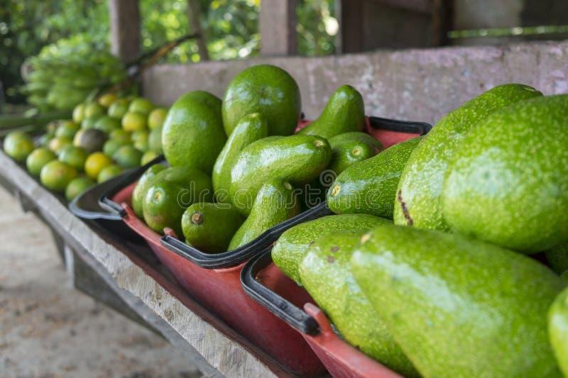 Avocado - Kolumbien lizenzfreie stockfotos