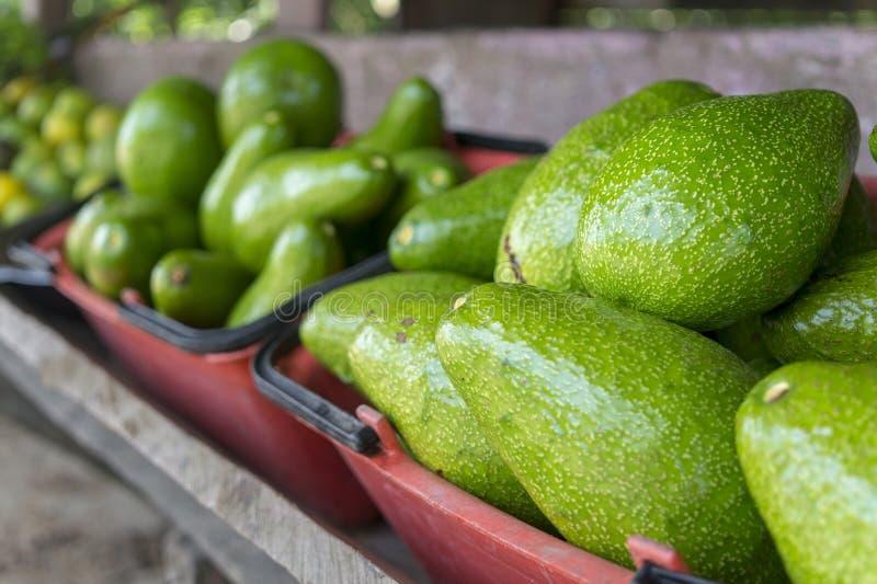 Avocado - Kolumbien lizenzfreie stockfotografie