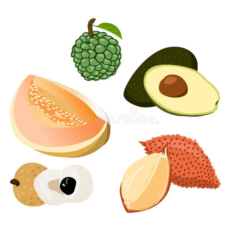 Avocado, Longan, Salacca, Rollina, Kantalupe vektor abbildung