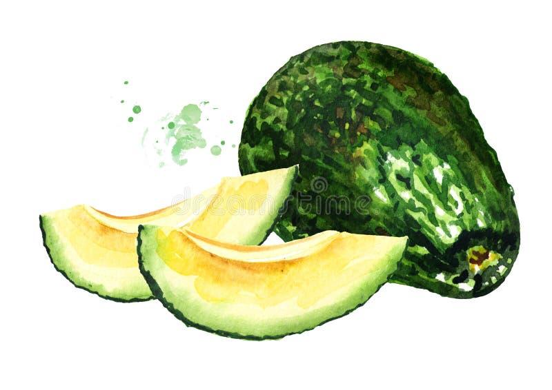 Avocado maturo affettato Illustrazione disegnata a mano dell'acquerello, isolata su fondo bianco illustrazione di stock