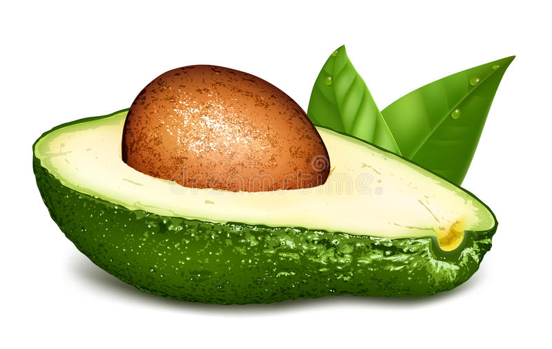 Avocado mit Kern und Blättern stock abbildung