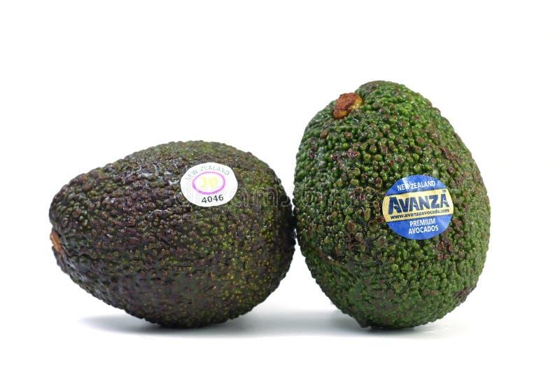 Avocado Nowa Zelandia import dla sprzedaży zdjęcie royalty free
