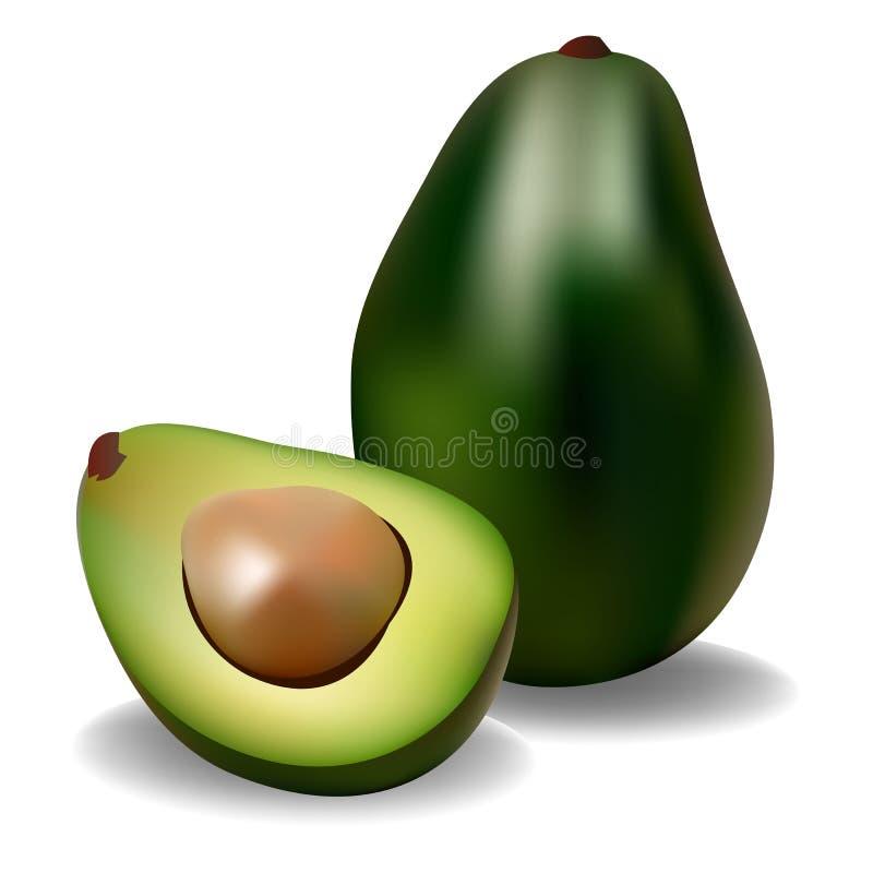 Avocado owoc zielonego jedzenia połówka ilustracja wektor