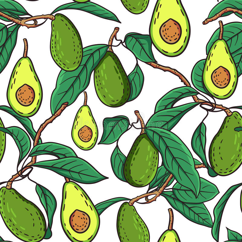 Download Avocado pattern stock vector. Image of food, exotic, healthy - 59453344
