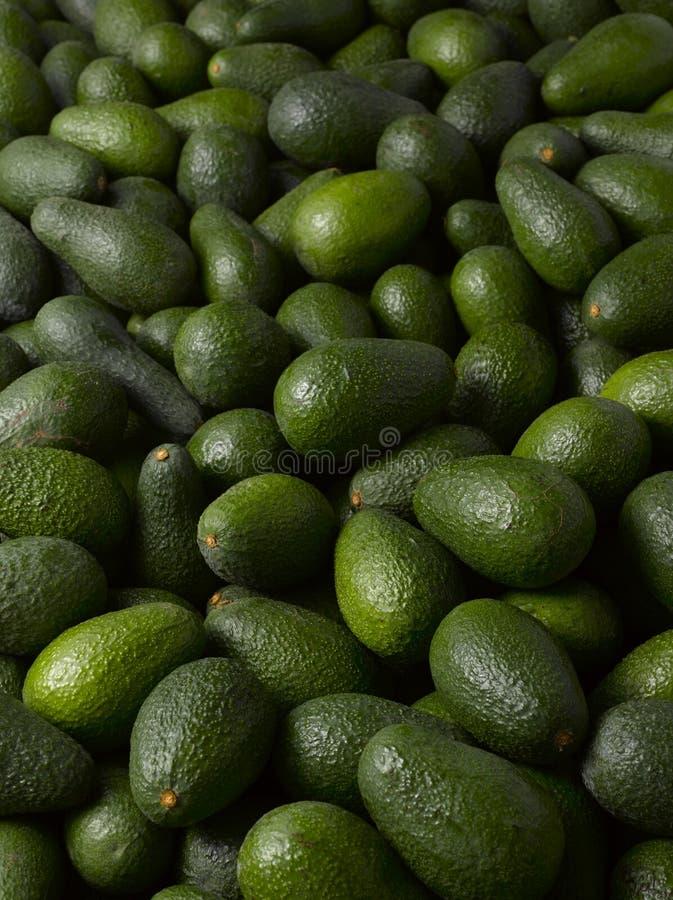Avocado's royalty-vrije stock foto's