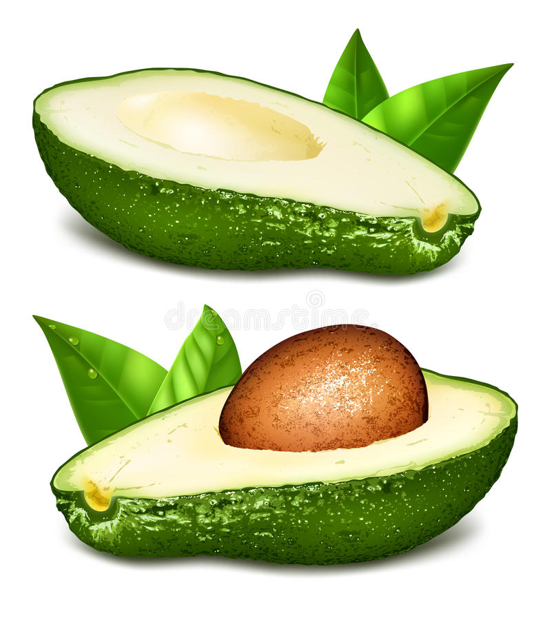 Avocado's met kern vectorillustratie stock illustratie