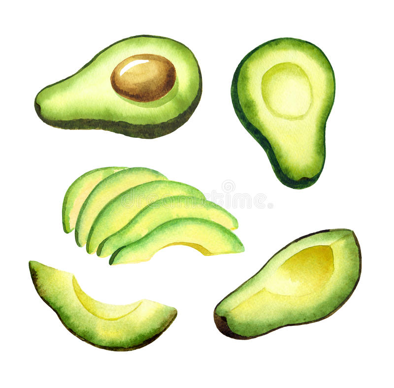 Avocado set vector illustration