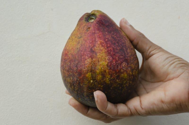 Avocado ter beschikking royalty-vrije stock foto