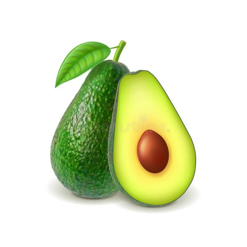 Avocado und Scheibe auf weißem Vektor stock abbildung