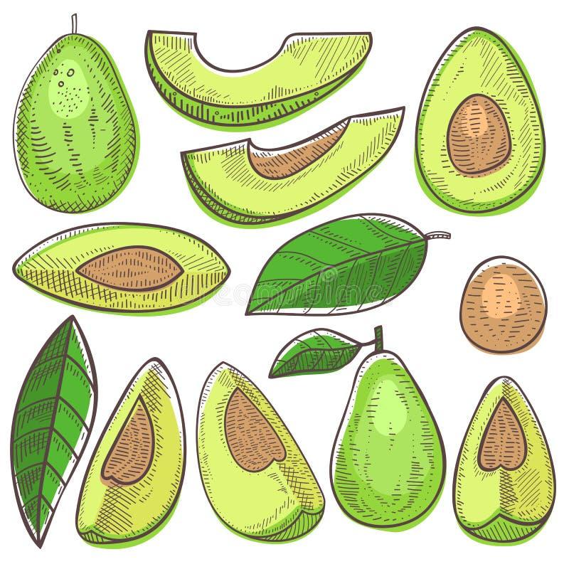 Avocado vector groene natuurvoeding en gezonde de illustratiereeks van de verse groentevoeding van tropische gesneden exotisch stock illustratie