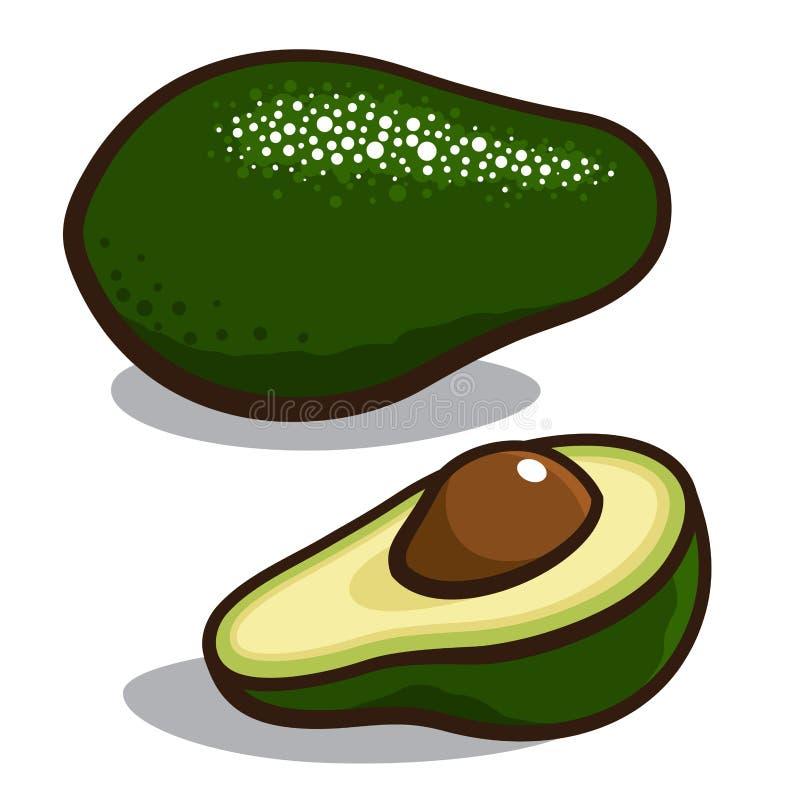 Avocado royalty free illustration