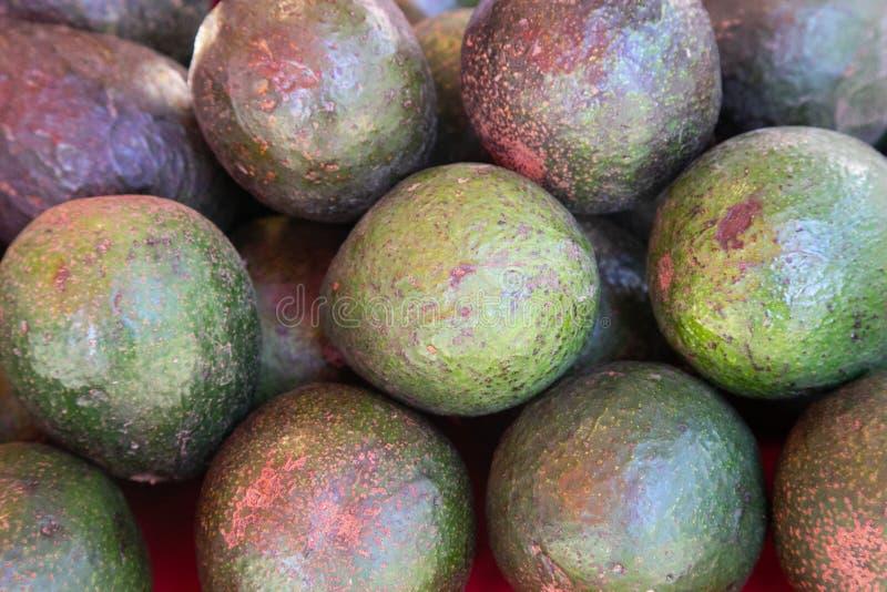 Avocado verwijst ook naar de vruchten van de Avocado-boom, die botanisch een grote bessen is met één zaadje Avocados zijn erg royalty-vrije stock afbeelding