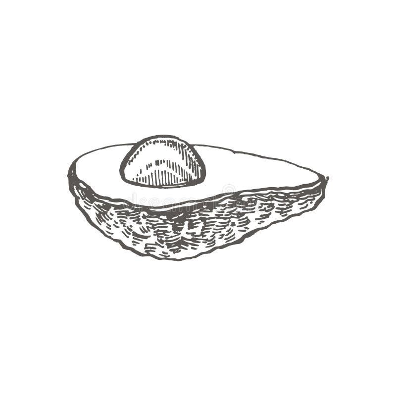 Avocado Wektorowa ręka rysować ilustracje Tropikalna owoc grawerująca lato stylowa ilustracja ilustracji