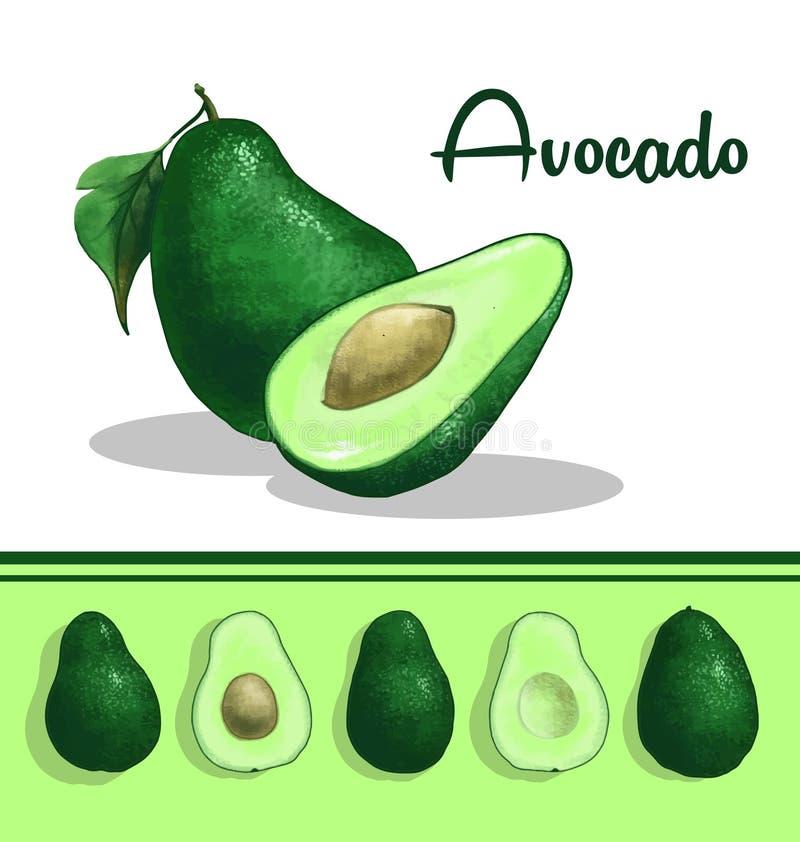 Avocadoclipart lizenzfreie abbildung