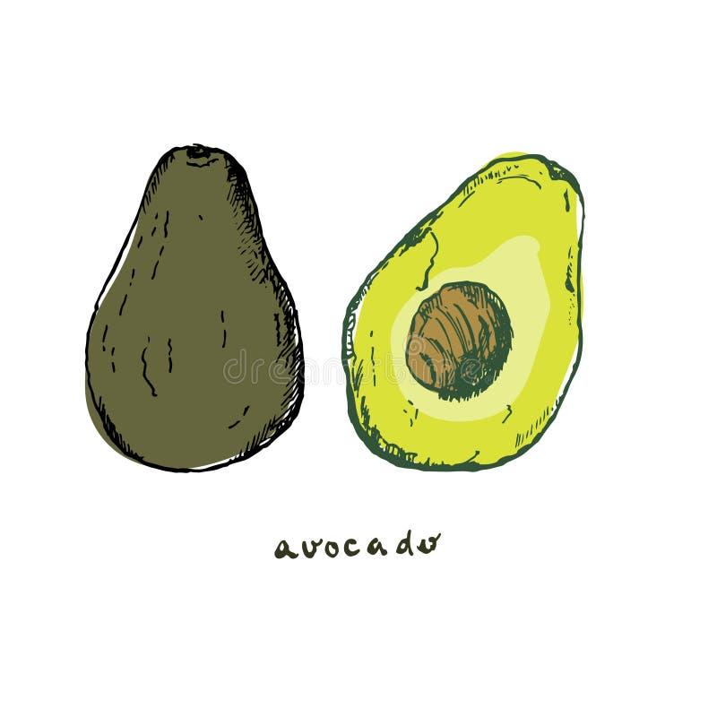 Avocadogroente en fruit vectorhand getrokken illustratie De organische affiche van het groentenvoedsel van avocado Lineaire wijno stock illustratie