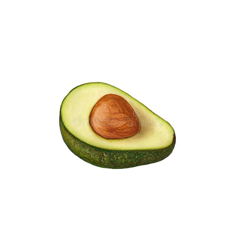 Avocadoillustratie stock afbeeldingen