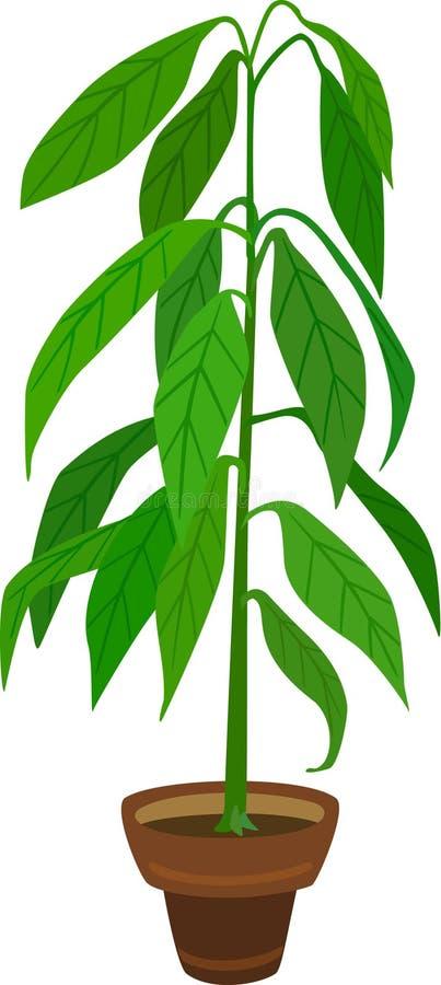 Avocadoinstallatie stock illustratie