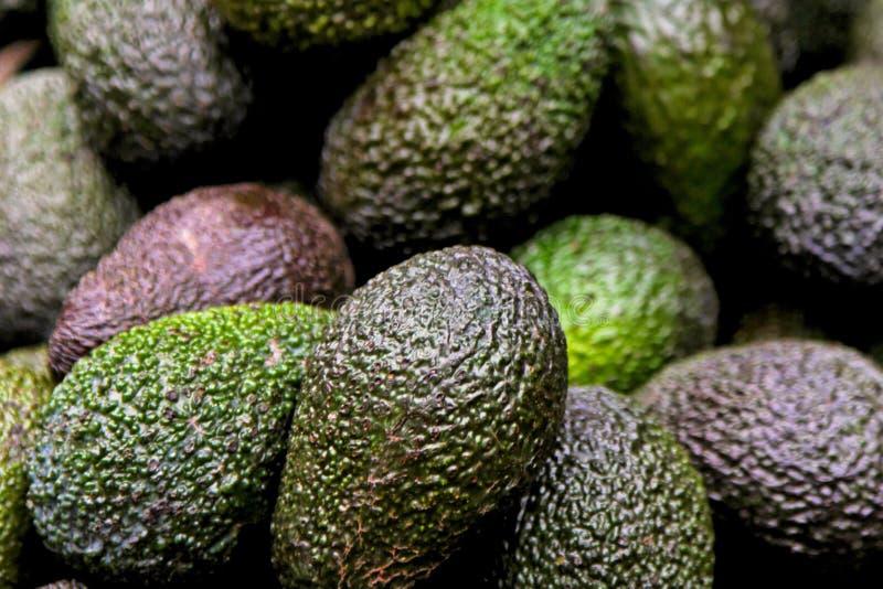Avocados stockfotos
