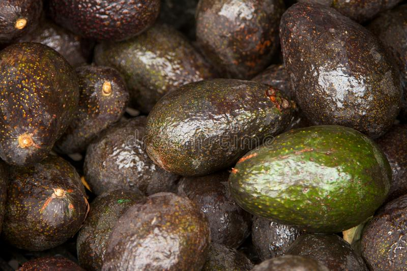 Download Avocados stock photo. Image of avocado, produce, harvest - 26021416
