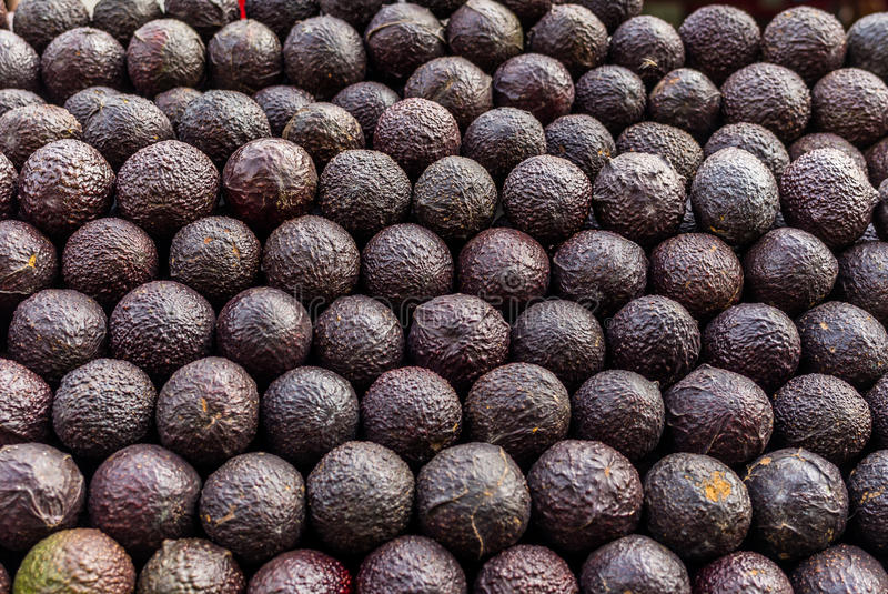 Avocados at a market in Mexico. In the morning royalty free stock image