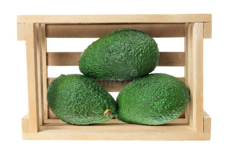 avocados skrzynka obraz stock