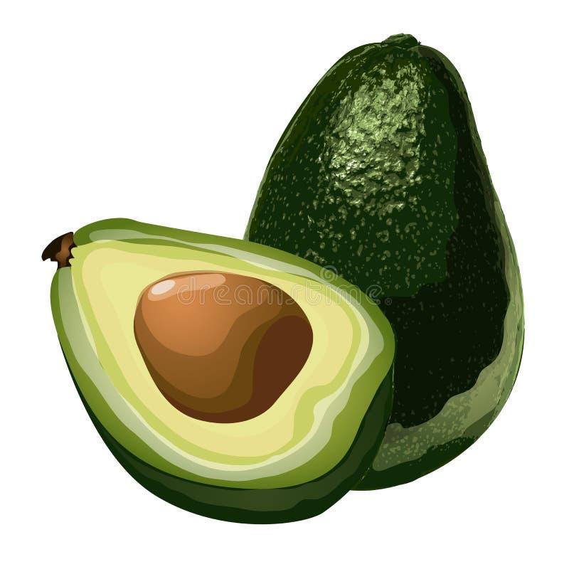Avocat, entier verts et tranche avec du maïs Fruit exotique huileux, nourriture de vecteur illustration de vecteur