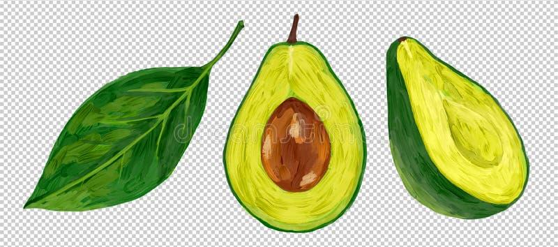 Avocat frais de moitié-coupe de vecteur de style de peinture à l'huile avec la feuille verte d'isolement sur le fond d'imitation  illustration de vecteur