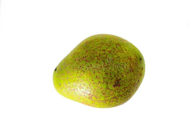 Avocatofrucht oder Persea Americana auf lokalisiertem weißem Hintergrund lizenzfreie stockfotografie