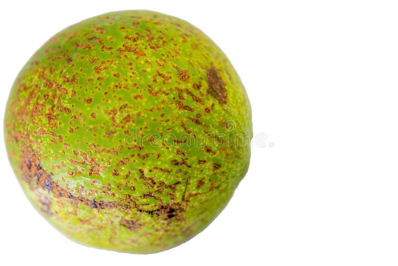 Avocatofrucht oder Persea Americana auf weißem Hintergrund lizenzfreie stockfotografie