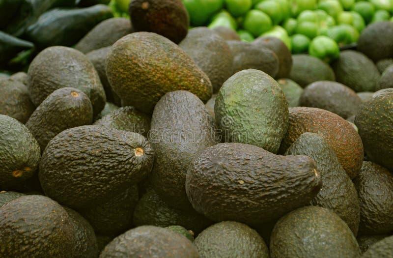 Avocats photos stock