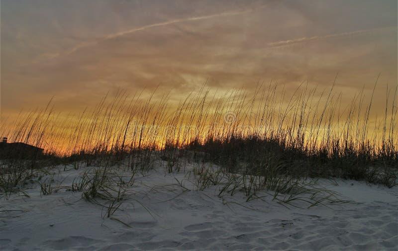 Avoine de mer au coucher du soleil image stock