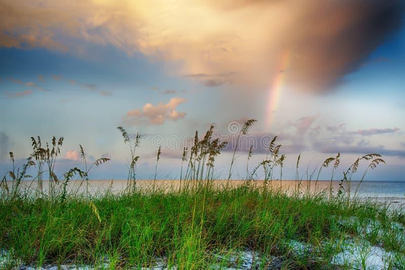 Avoine de mer s'élevant sur la plage avec l'arc-en-ciel et les nuages à l'arrière-plan photos libres de droits