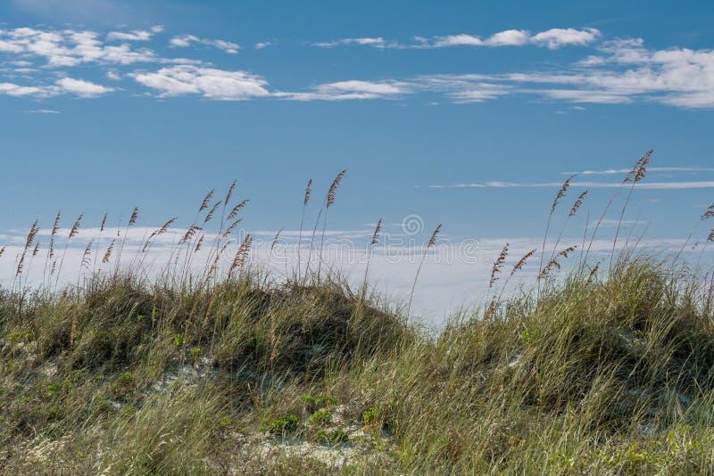 Avoine de mer sur la dune de sable images stock
