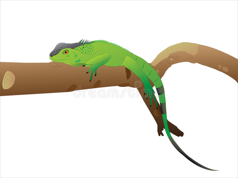 Avoir un iguane de reste. illustration stock
