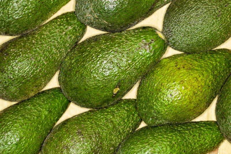 Avokado avocadostamgästbakgrund Makro royaltyfri fotografi