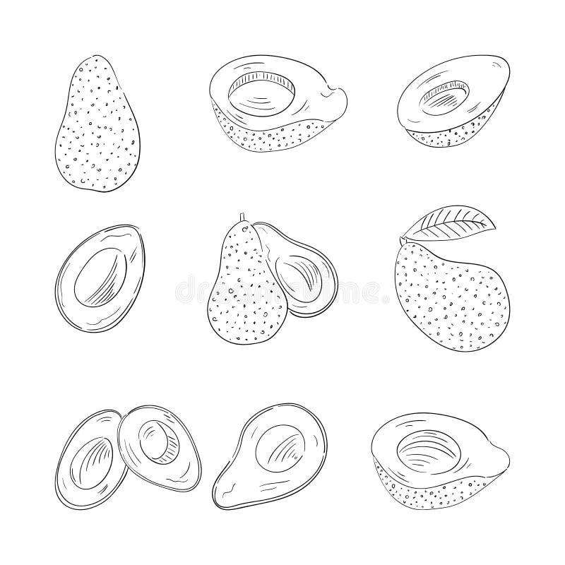 Avokadohelhet och uppsättning för snittöversiktsillustrationer stock illustrationer