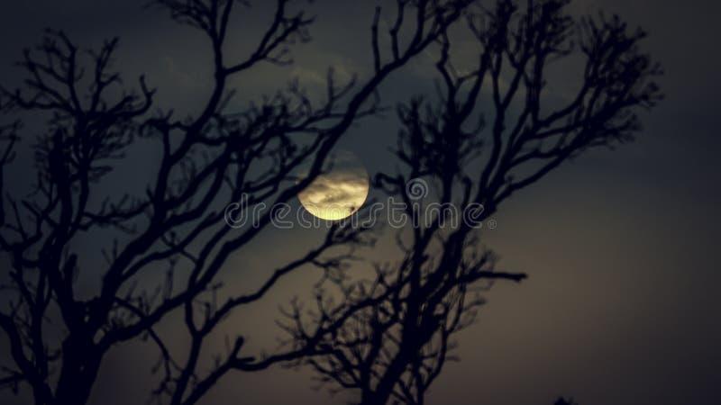 avond royalty-vrije stock fotografie