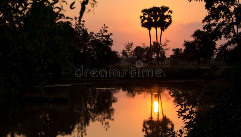 Avond van de aard de gouden zonsondergang stock afbeelding